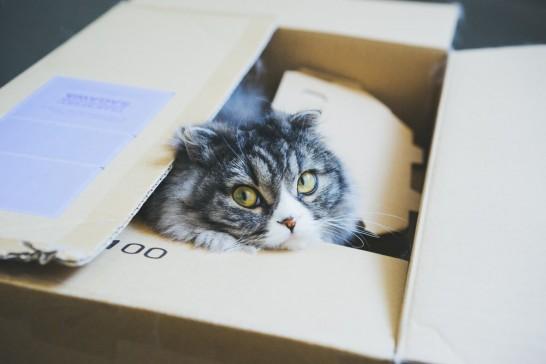 画像検索が使えなくて困ったネコ
